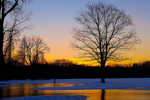 Fire and Ice by Jeff Picoult