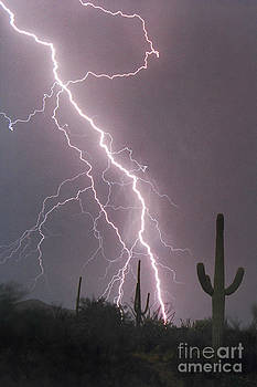 Douglas Taylor - FIRE AND RAIN