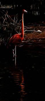 Weston Westmoreland - Fire Flamingo