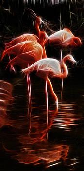 Weston Westmoreland - Fire Flamingos