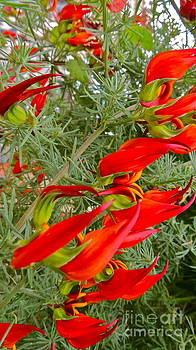 LeLa Becker - fire flowers