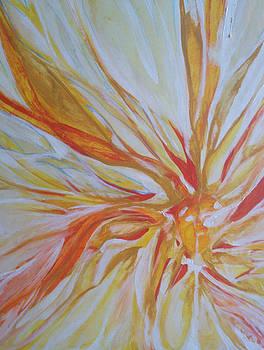 Fire fly by Stephanie Frances Meyer