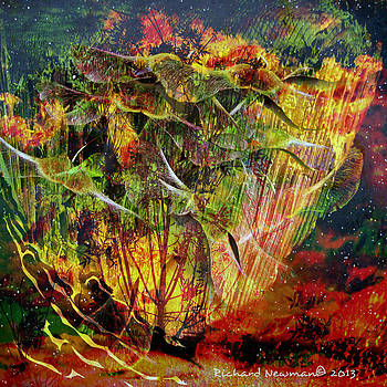Fire Land by Richard Newman