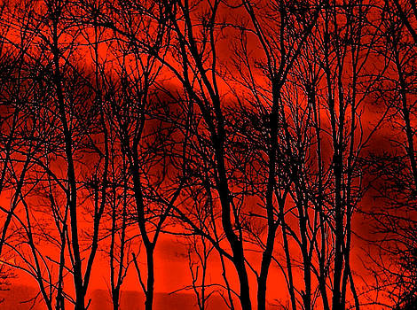 Fire Trees by Gillis Cone