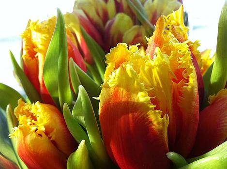 Fire Tulips by J P