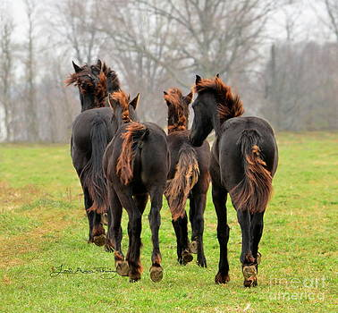 Firetail Friesians  by Lori Ann  Thwing