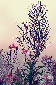 Fireweed Creative Floral Decor by Miss Dawn