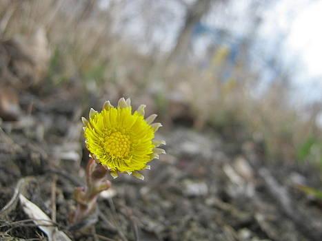 First Flower by Tatyana Primak