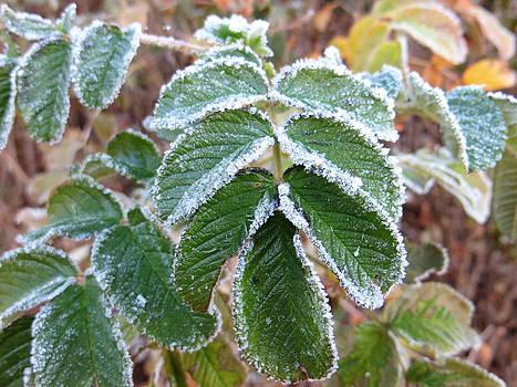 First Frost by Pamela Turner