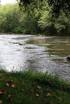 First Leaves at Antietam Creek by Jennifer Fliegel
