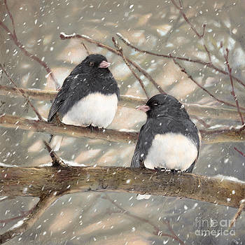 First Snow Dark-eyed Juncos by Laurie Musser