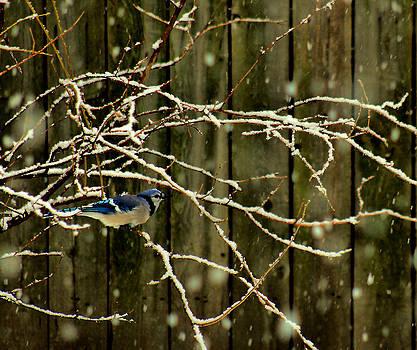Matthew Winn - First Snow in Blue