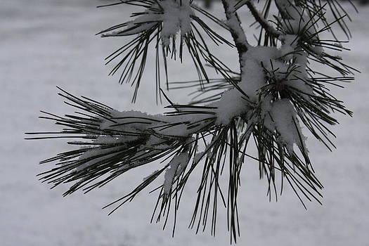 Vadim Levin - First Snow