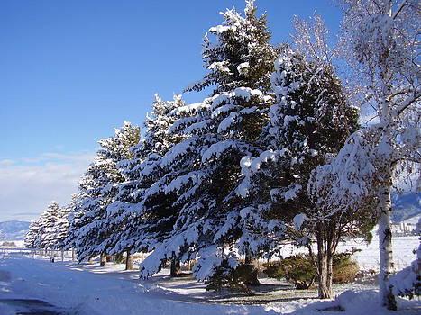 First Snow by Yvette Pichette
