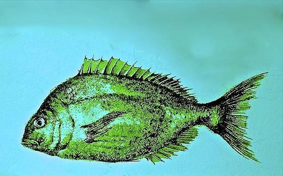 Fish by Jim Ellis