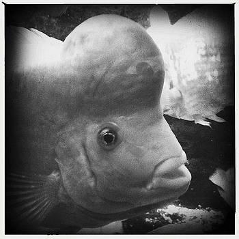 Fish by Bradley R Youngberg