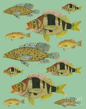 Fish by Donovan OMalley