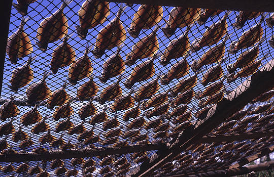 Fish drying in the sun II by Henrique Souto