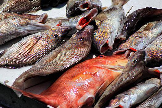 Fish by George Ferreira