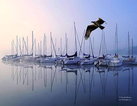 Randall Branham - Fish Hawk Sailing Foggy Sunrise