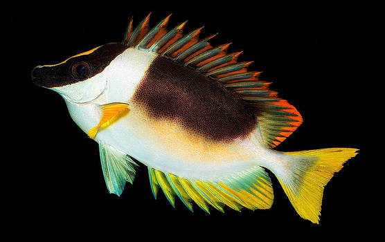 Fish in the Aquarium by Yasar Ugurlu