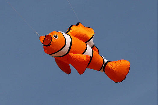 Nemo Clown Fish Kite by John Rockwood