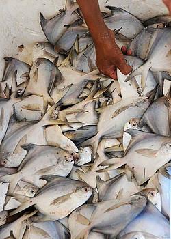 Fish Market by Money Sharma