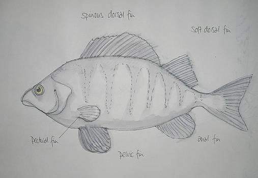 Fish by Michelle Deyna-Hayward