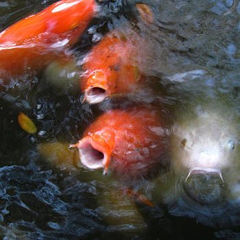 Fish Mouths 2 by Debra Hurd