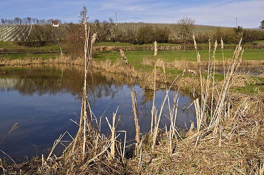 Fish Pond and Vineyards Germany by David Davies