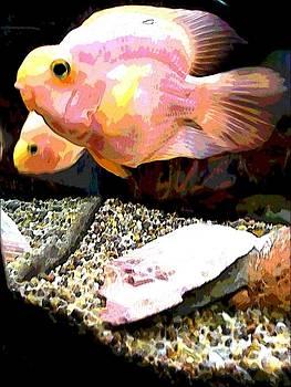 Fish by Sarah E Kohara