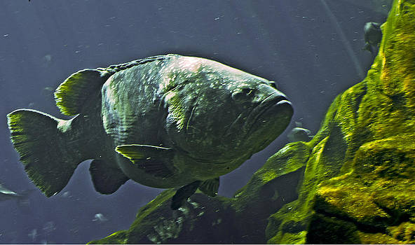 Fish2 by Fred L Gardner