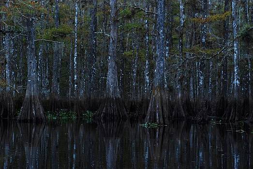 Carol Kay - Fisheating Creek 16