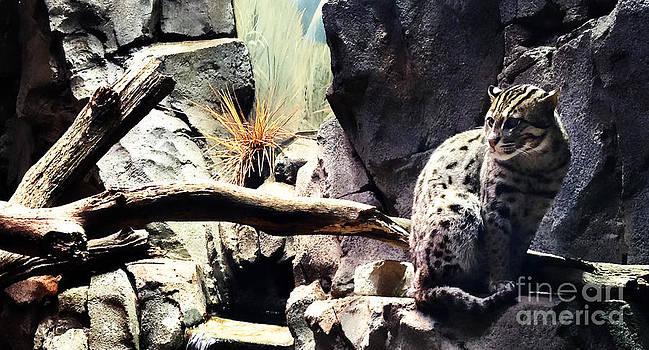 Nancy Stein - Fishing Cat
