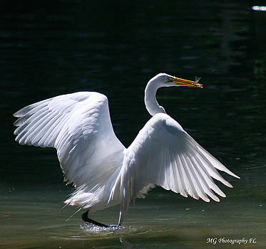 Fishing Egret by Marty Gayler