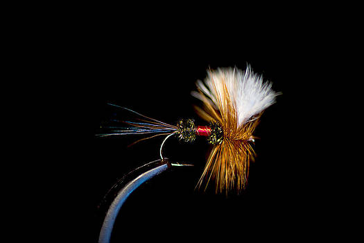 Fishing Fly by Jim DeLillo
