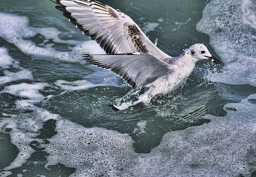 Deborah Benoit - Fishing In The Foam