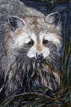 Fishing - Raccoon catching lunch by Jan Lowe