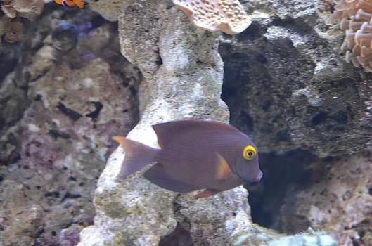 Fishy Friend by Chandra Wesson