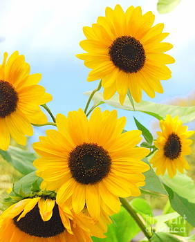 Five Gorgeous Sunflower Heads by Eunice Miller