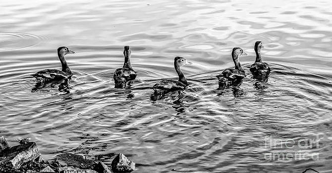 Kathleen K Parker - Five Little Ducks-bw