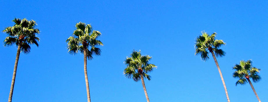 Five Palms by JBDSGND OsoPorto