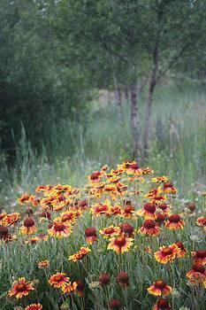 Flagstaff Flowers by Valerie Loop
