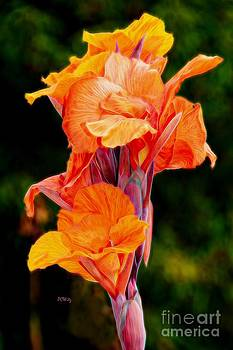 Flamboyant Orange Cannas by Patrick Witz