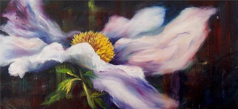 Flamboyant poppy by Elaine Bailey