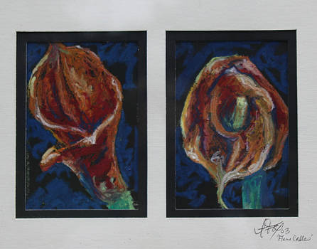 Flame Callas by Allison Fox