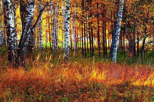 Jenny Rainbow - Flaming Grass