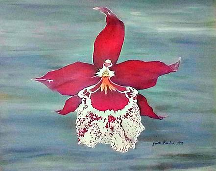 Flaming Orchid by Joetta Beauford