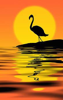 Flamingo at sunset by Nataly Rubeo