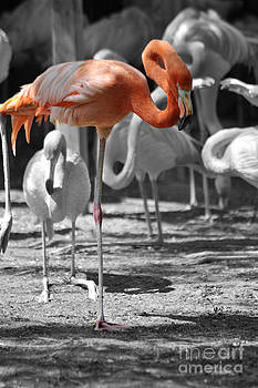 Elaine Mikkelstrup - Flamingo